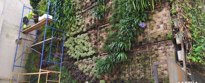 Actúa SM se inspira en los diseños del paisajista Burle Marx para restaurar el Jardín Vertical de Ontinyent